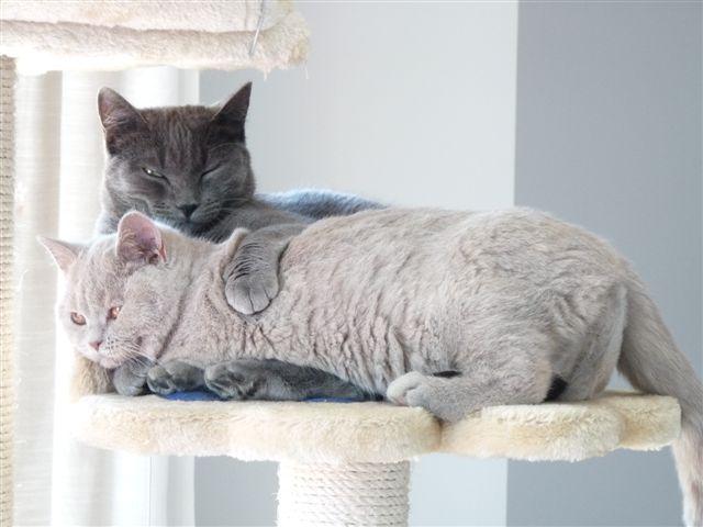 pension chat haute garonne