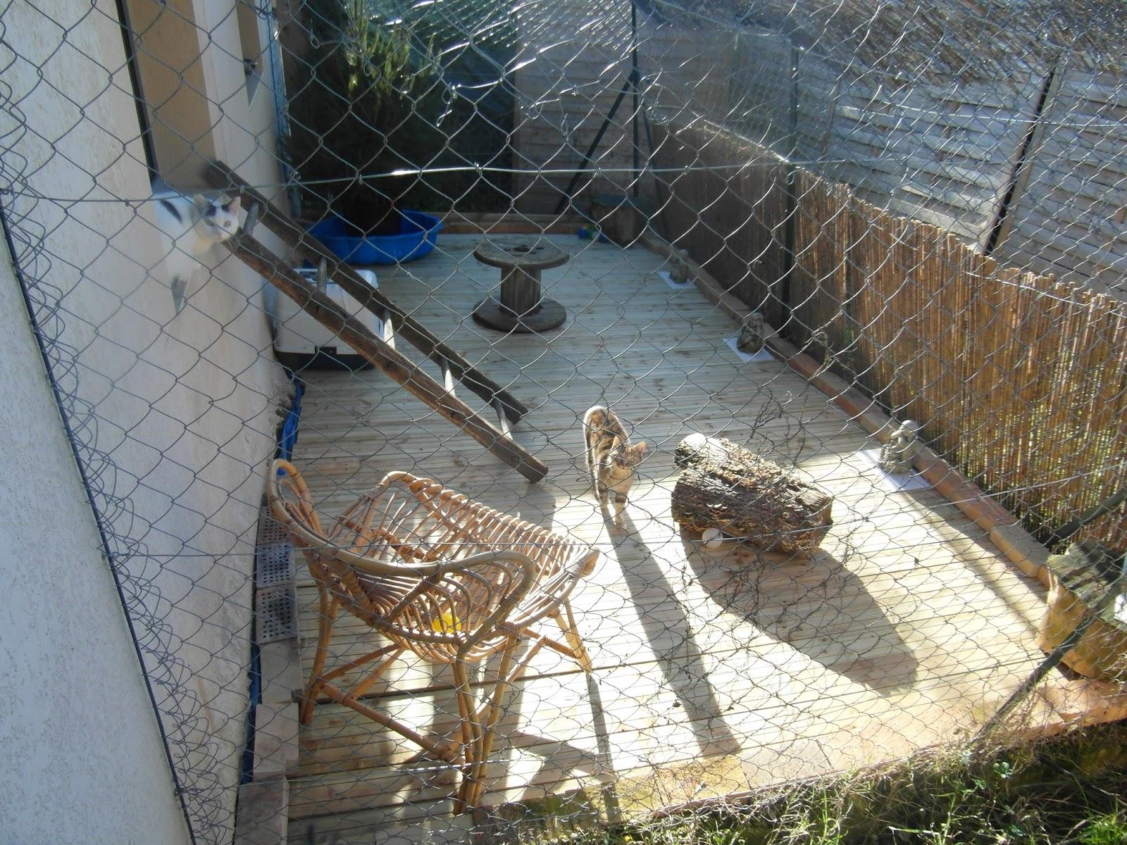 pension chat jardin