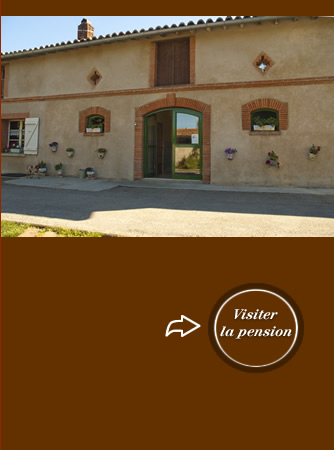 pension chat toulouse