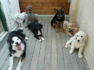 pension chien drome