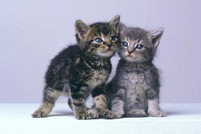 refuge chat en valais