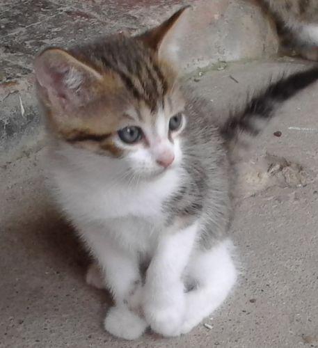 refuge chat eure et loir