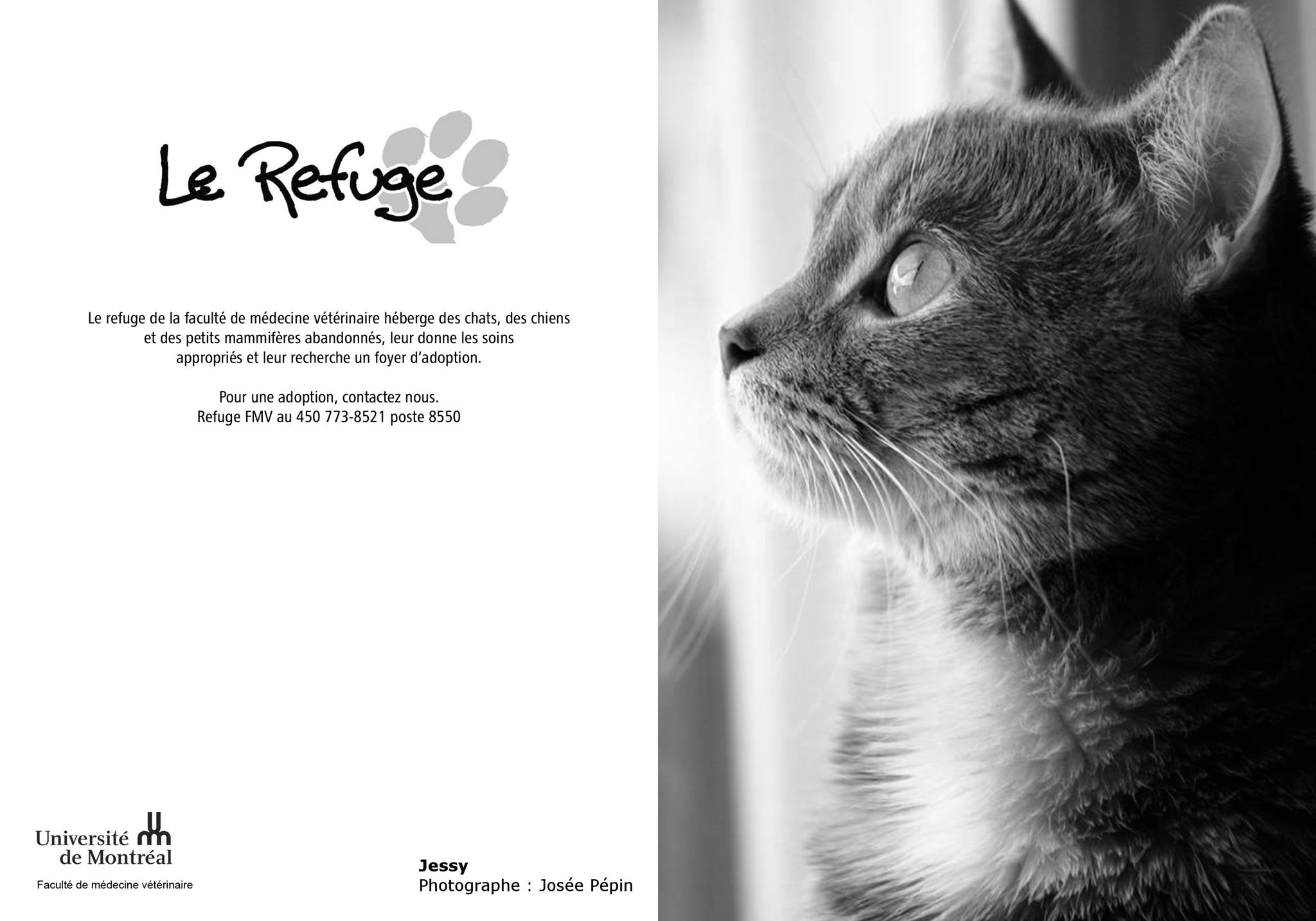 refuge chat faculte medecine veterinaire