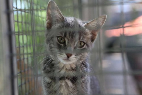refuge chat hyeres