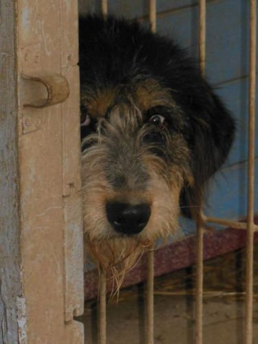 refuge chien 88