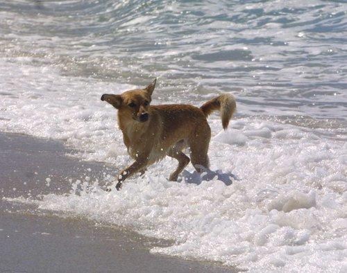 refuge chien a nice
