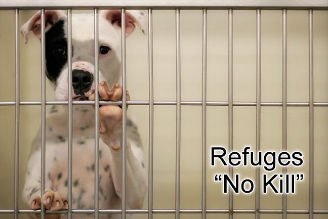 refuge chien a quebec