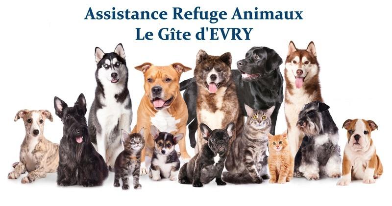 refuge chien evry