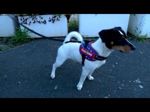 refuge chien gironde