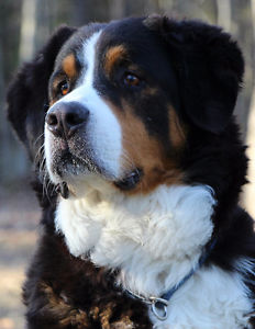 refuge chien kijiji