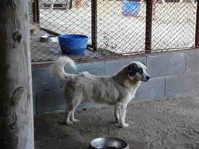 refuge chien roumain