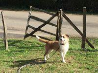 refuge chien st jean de luz