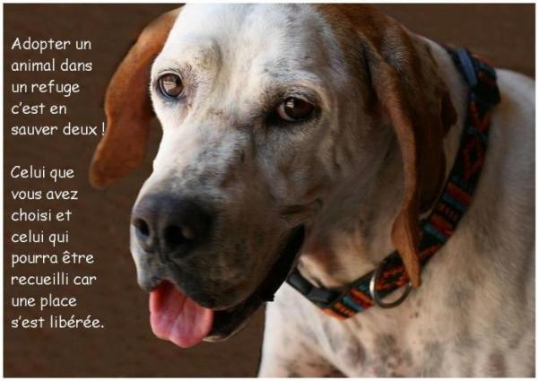 refuge chien toulon 83