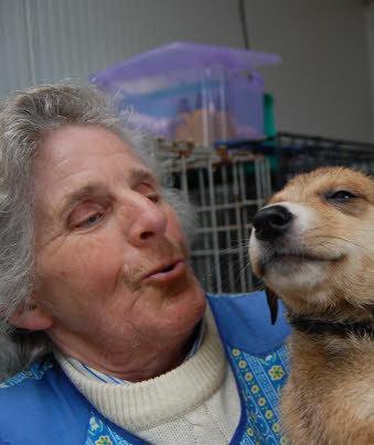 refuge chien tregrom