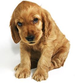 refuge chien vaucluse